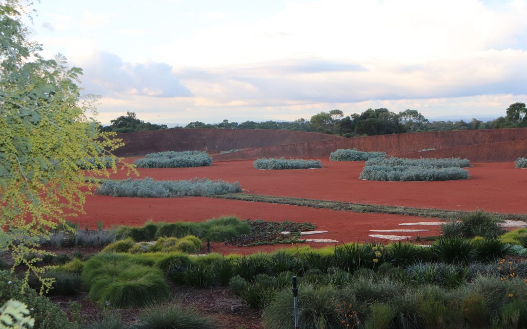Kingbird, Botanic Ridge